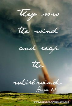sow the wind